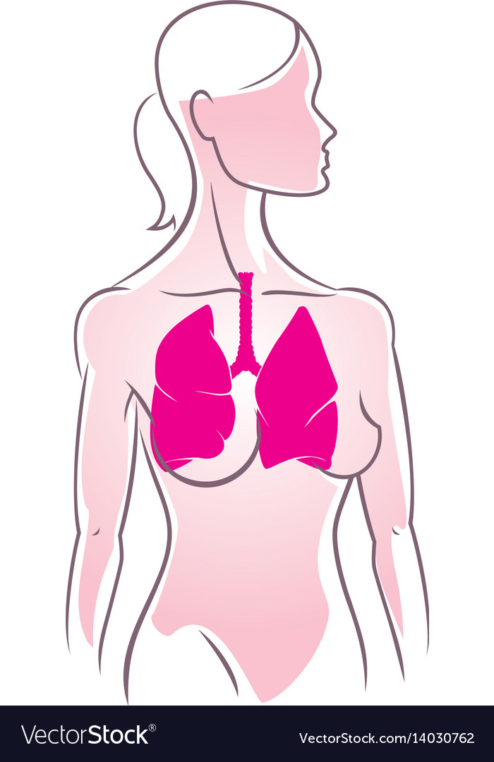 Anatomy vector image