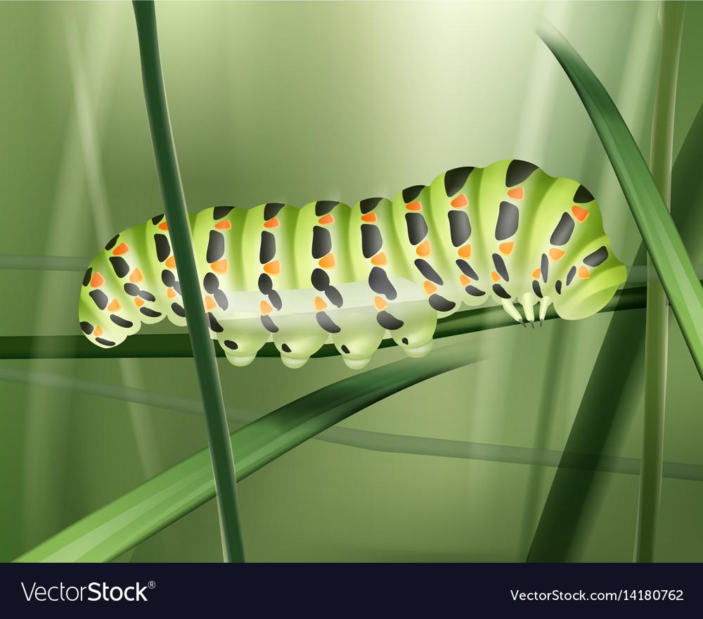 Green machaon caterpillar