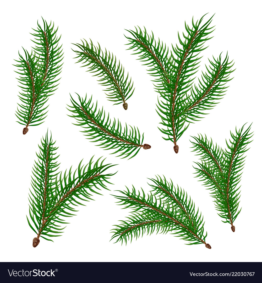 Realistic spruce fir tree branches set