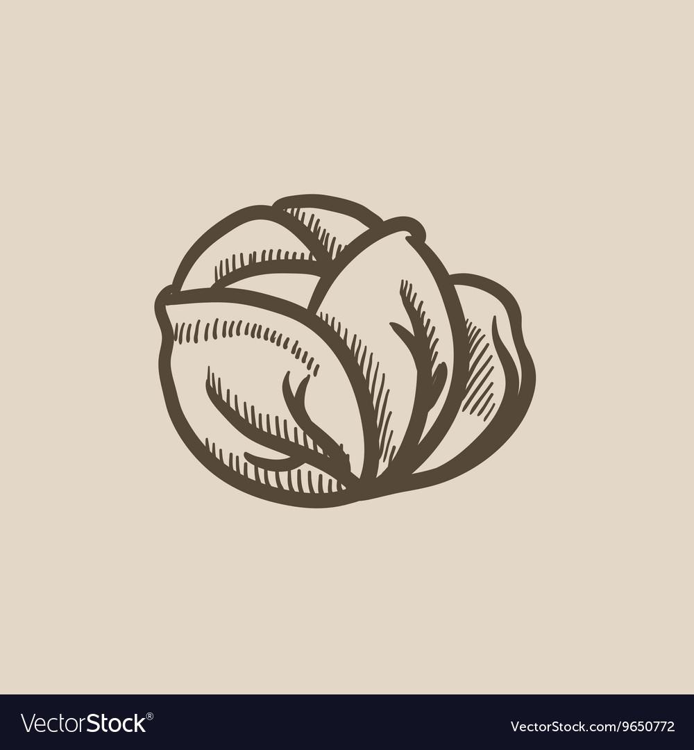 Cabbage sketch icon