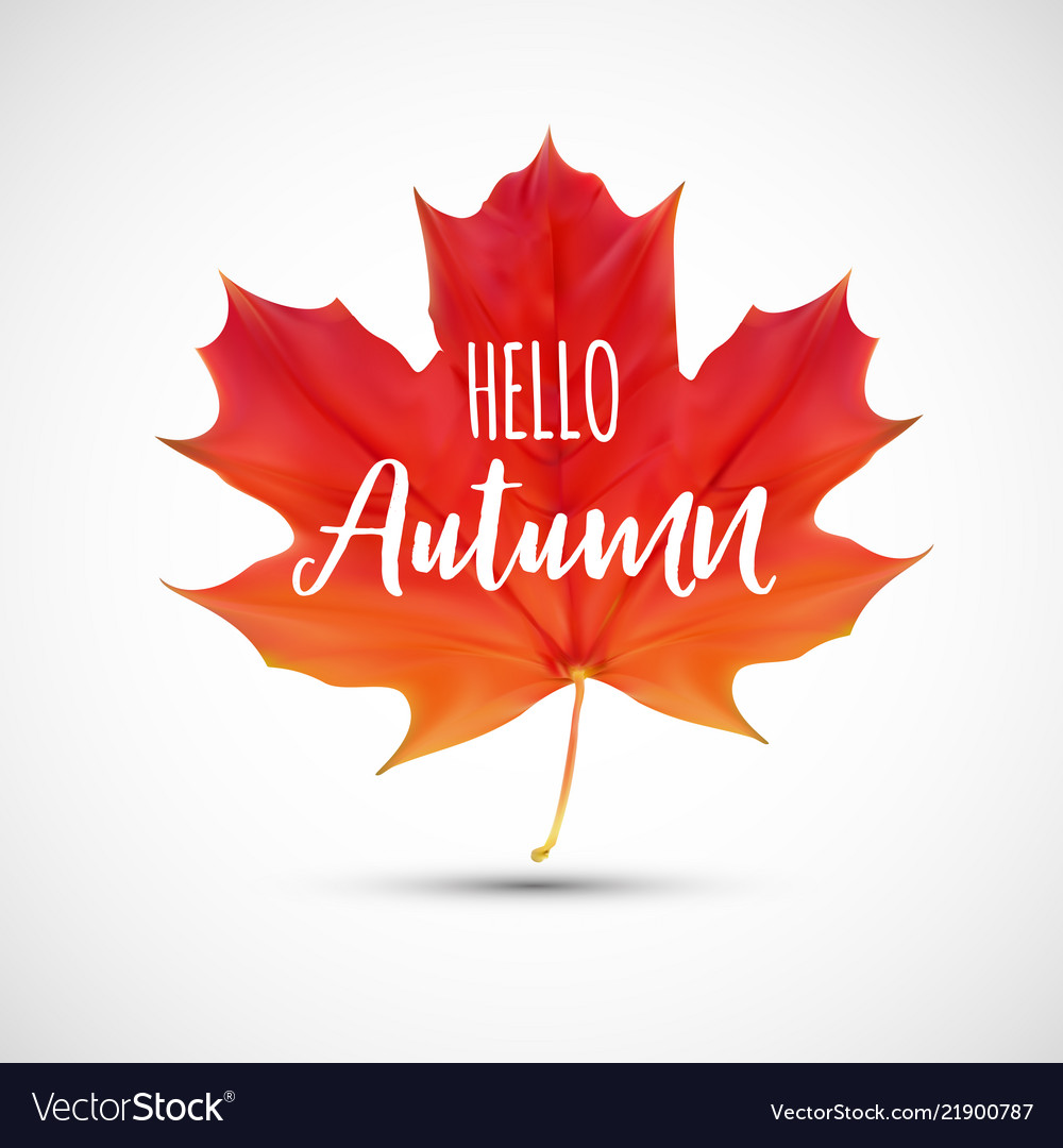 Shiny hello autumn natural leaves background