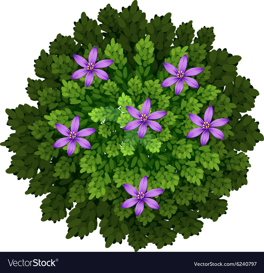 Purple flowers in green bush royalty free vector image purple flowers in green bush vector image mightylinksfo