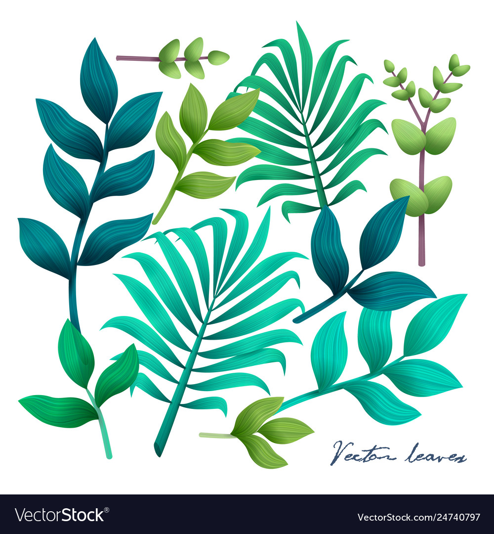 Tropical leaves set elements on white