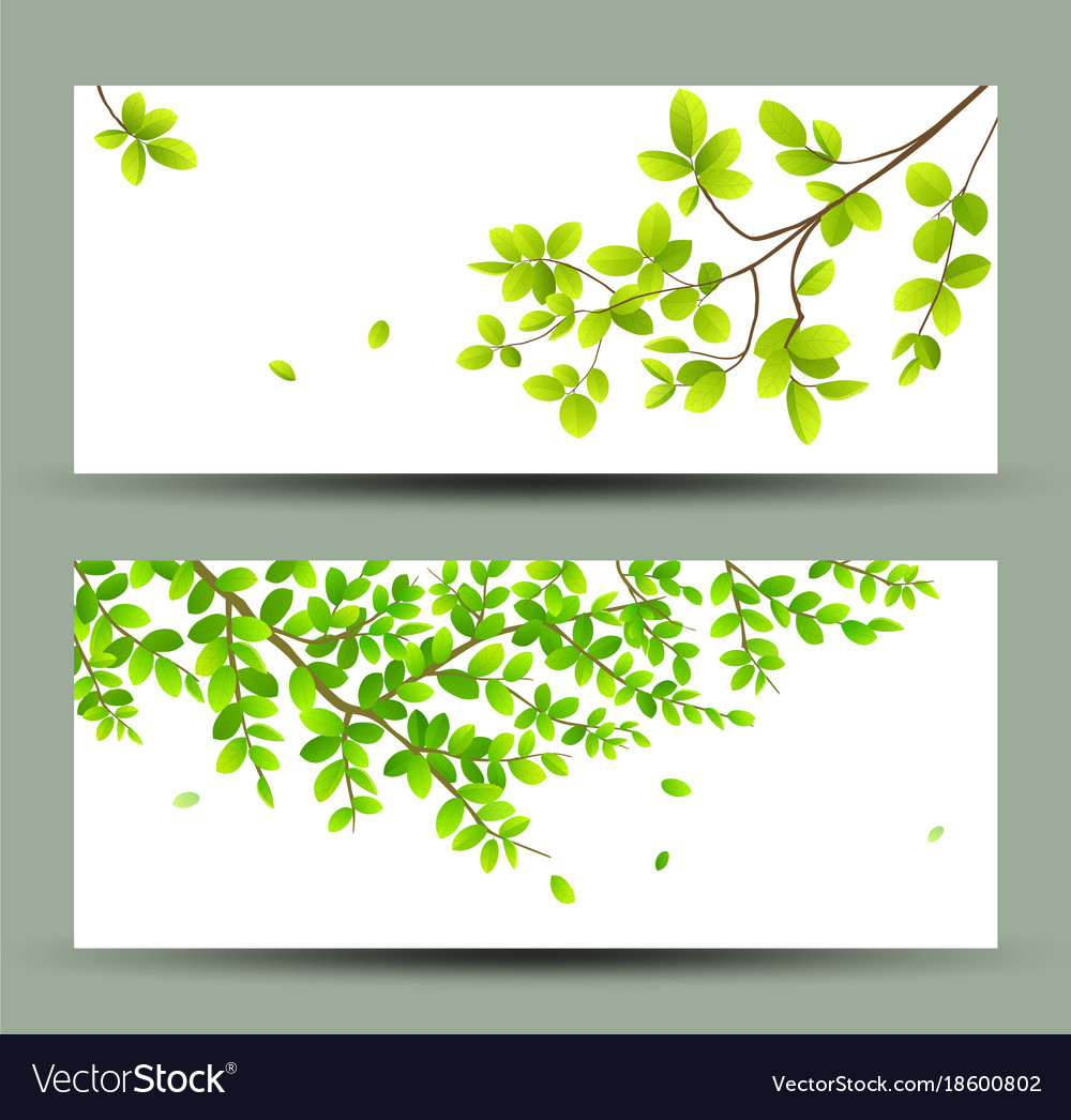 Tropical green leaves banners collections