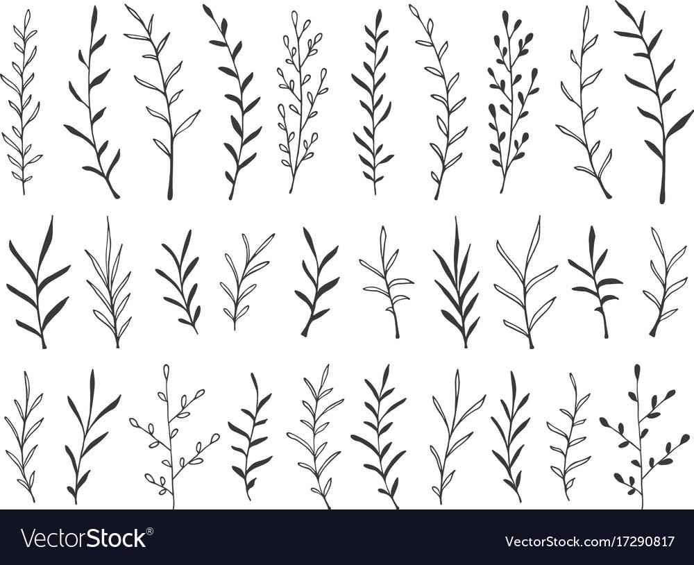 Hand drawn botanical decorative design elements