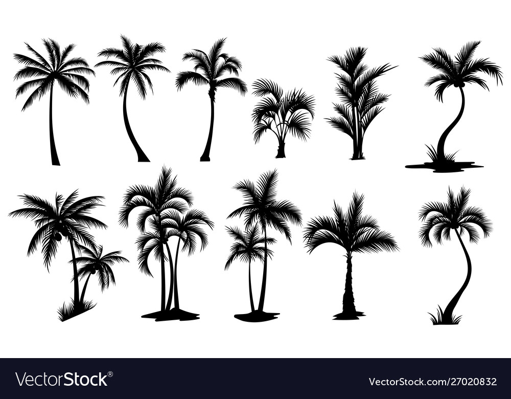 Set palm trees collection silhouette of
