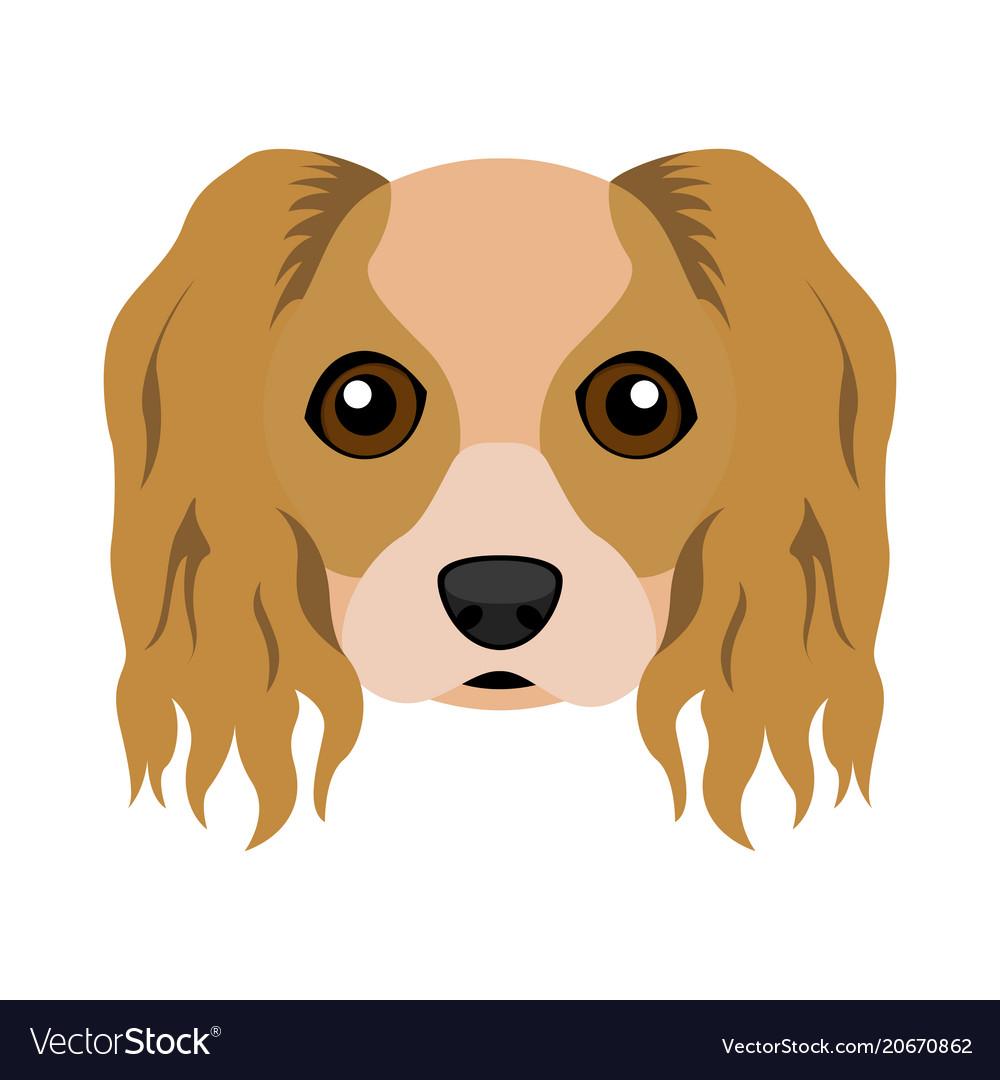 Most Inspiring Cavalier Canine Adorable Dog - cute-cavalier-king-charles-spaniel-dog-avatar-vector-20670862  Gallery_201417  .jpg