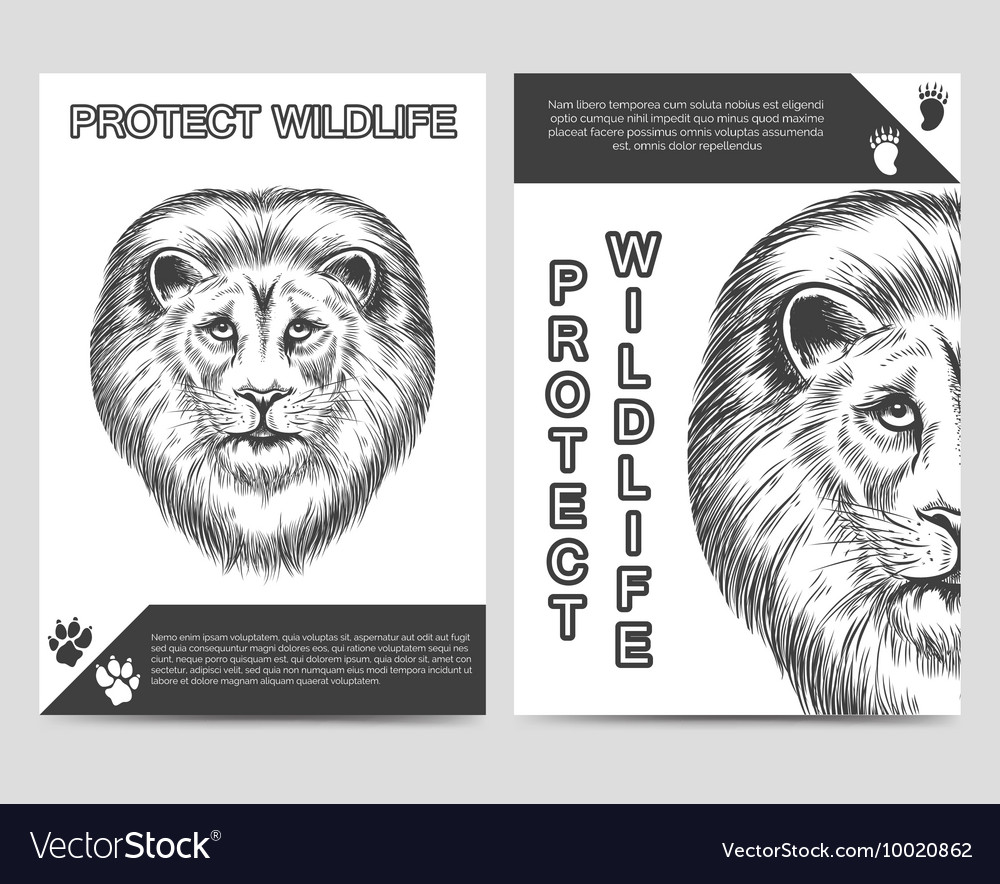 Protect nature brochure with lion