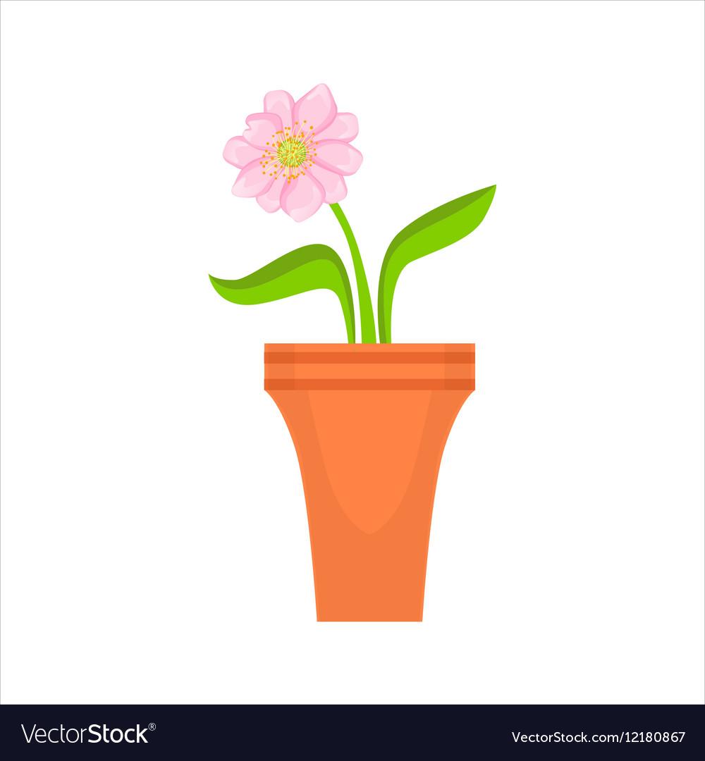 Home Single Pink Flower In The Flowerpot Flower Vector Image