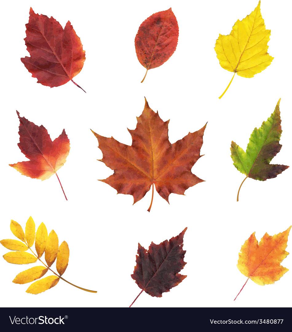 Big Set Leaves