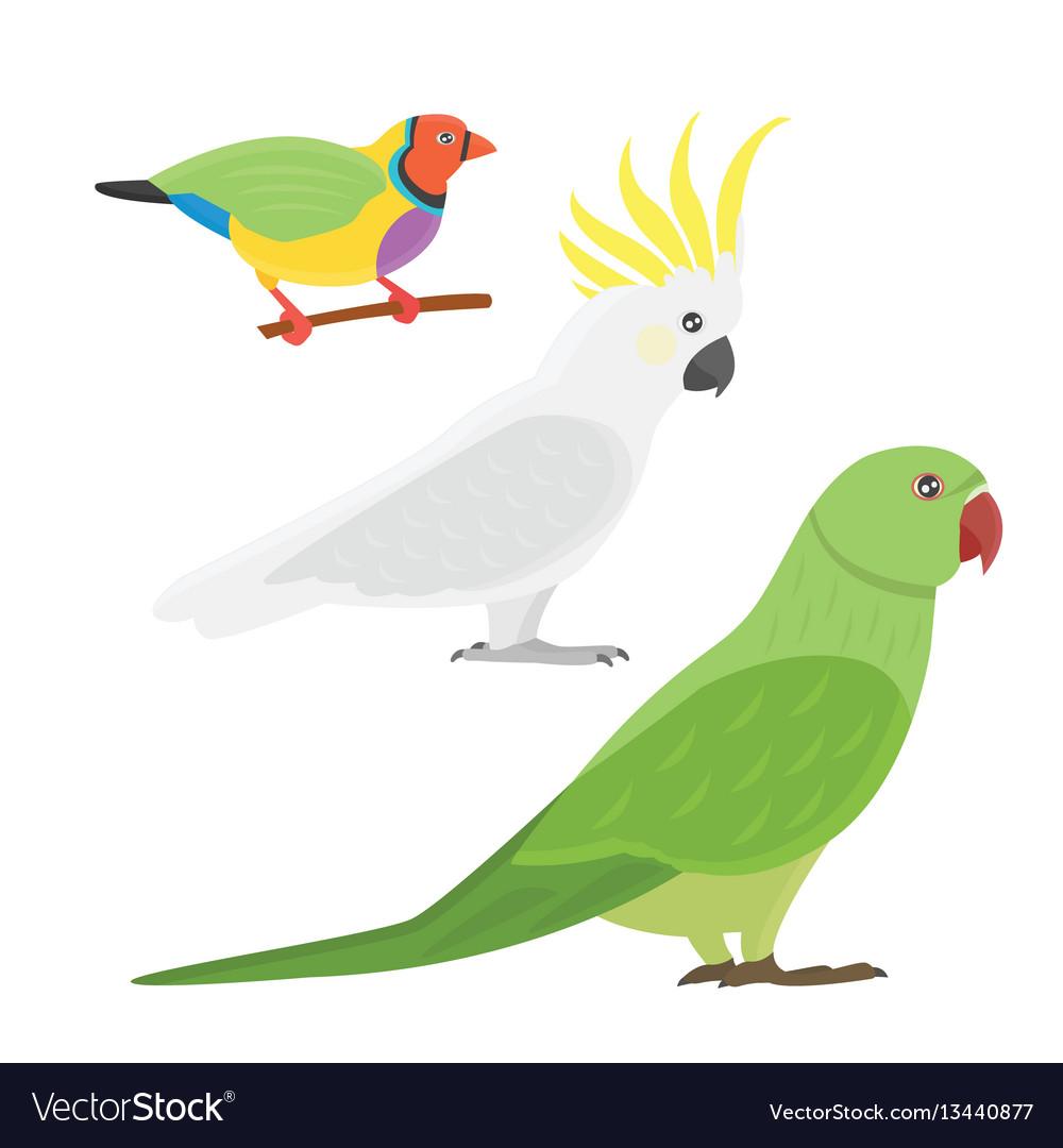 Cartoon tropical parrot wild animal bird