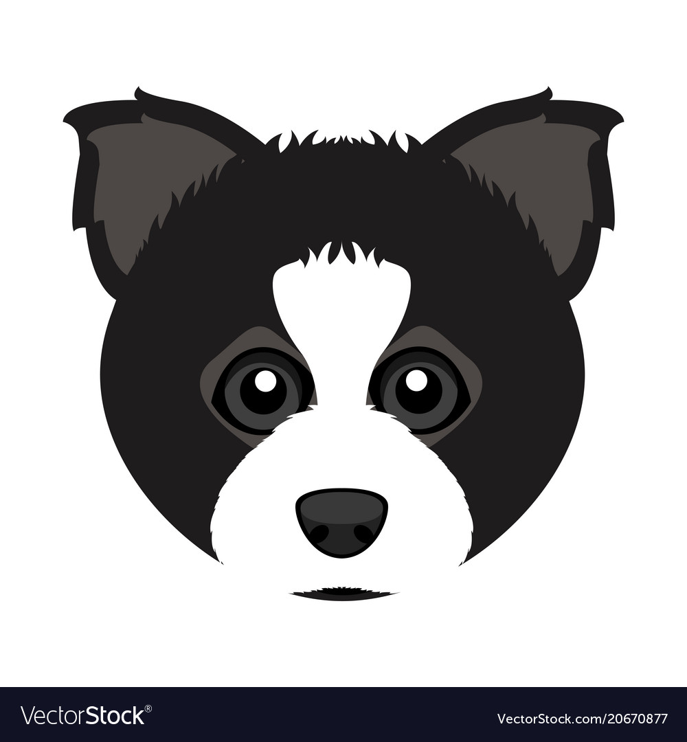 Cute border collie dog avatar vector image