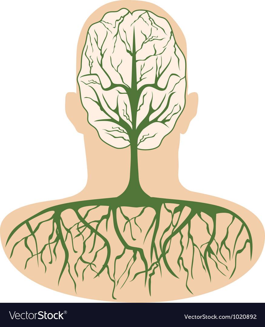 Brain tree vector image