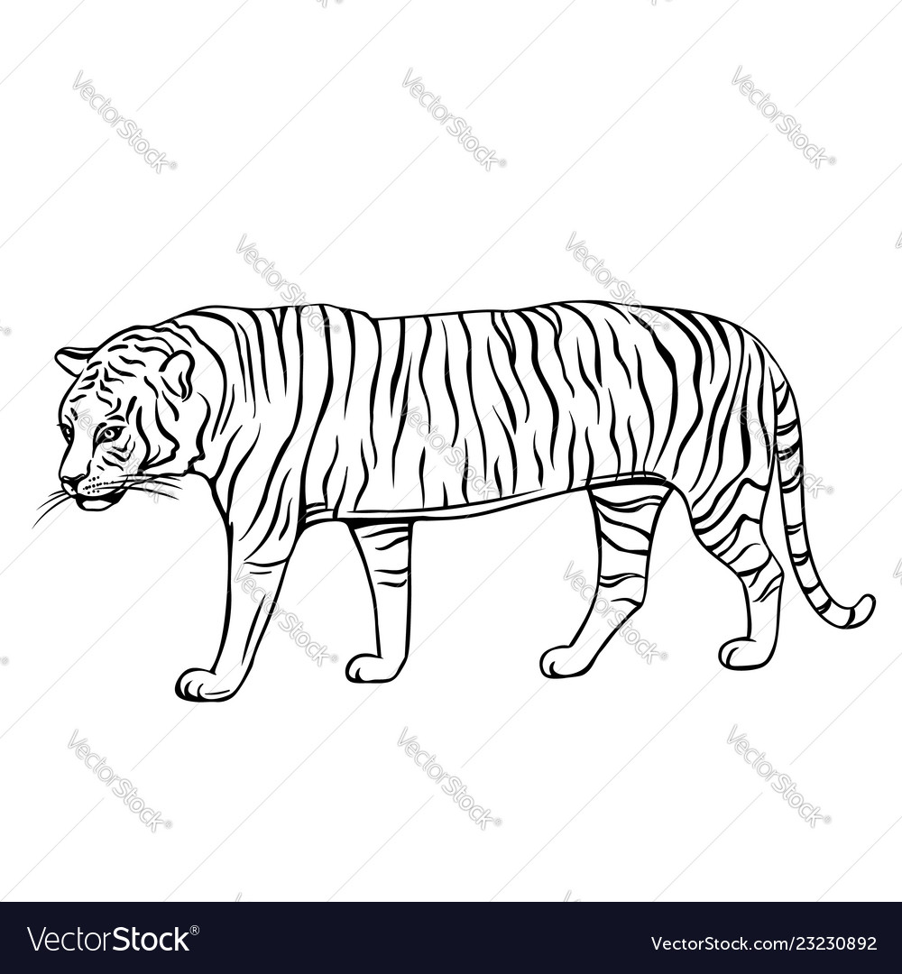 Outline tiger icon