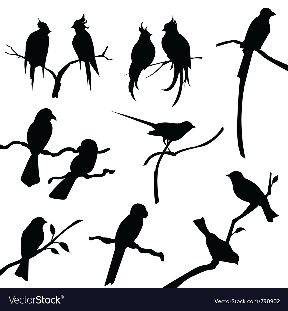 bird silhouettes royalty free vector image vectorstock rh vectorstock com birds flying silhouette vector bird flock silhouette vector