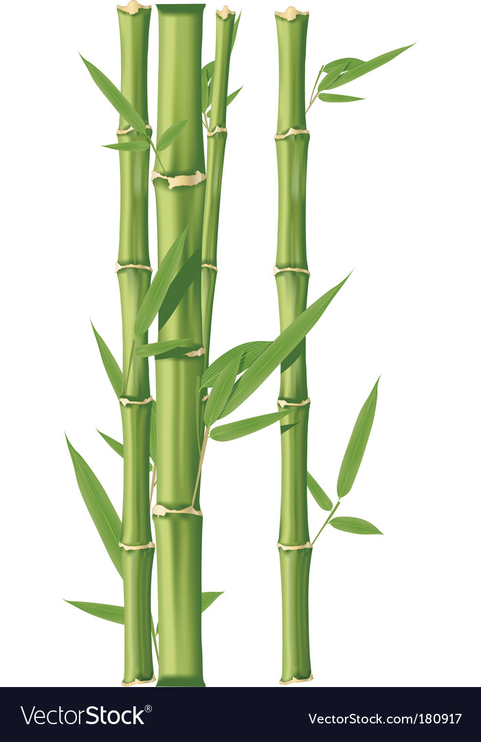 bamboo royalty free vector image vectorstock rh vectorstock com bamboo vector art bamboo vector illustration