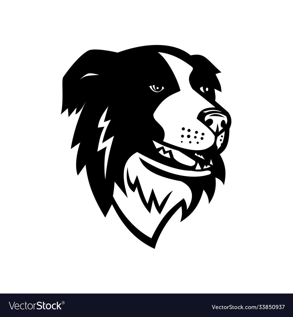 Head border collie or scottish sheepdog dog
