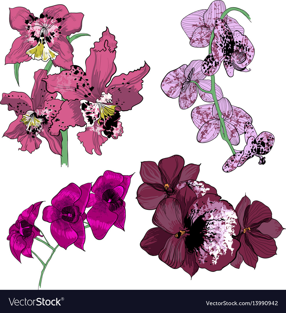 Colorful drawing orchids collection