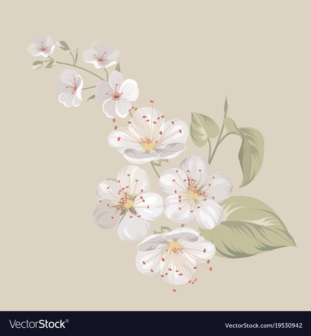 White cherry blossom flowers royalty free vector image white cherry blossom flowers vector image mightylinksfo