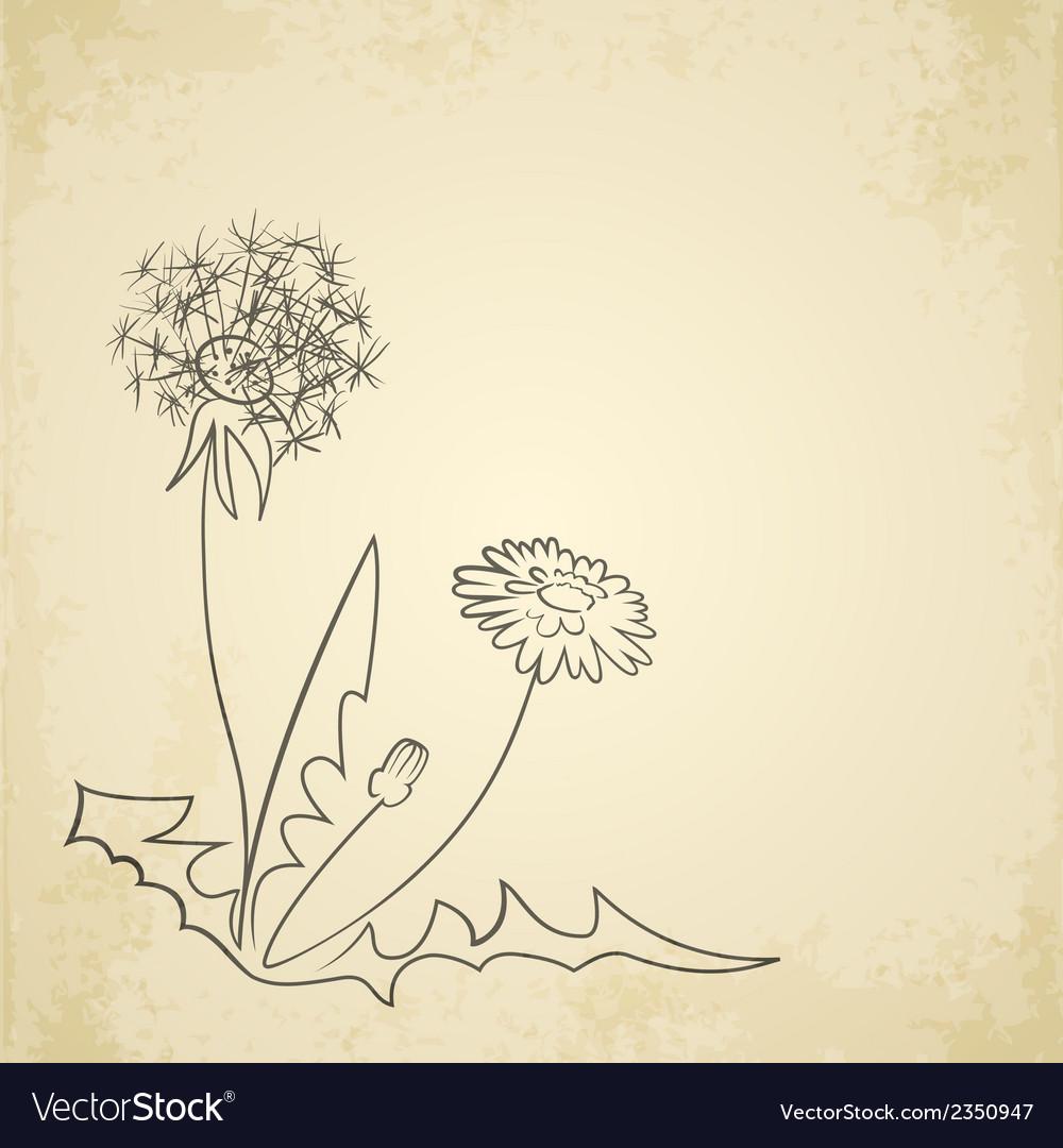 Dandelion pencil artwork on paper background vector image