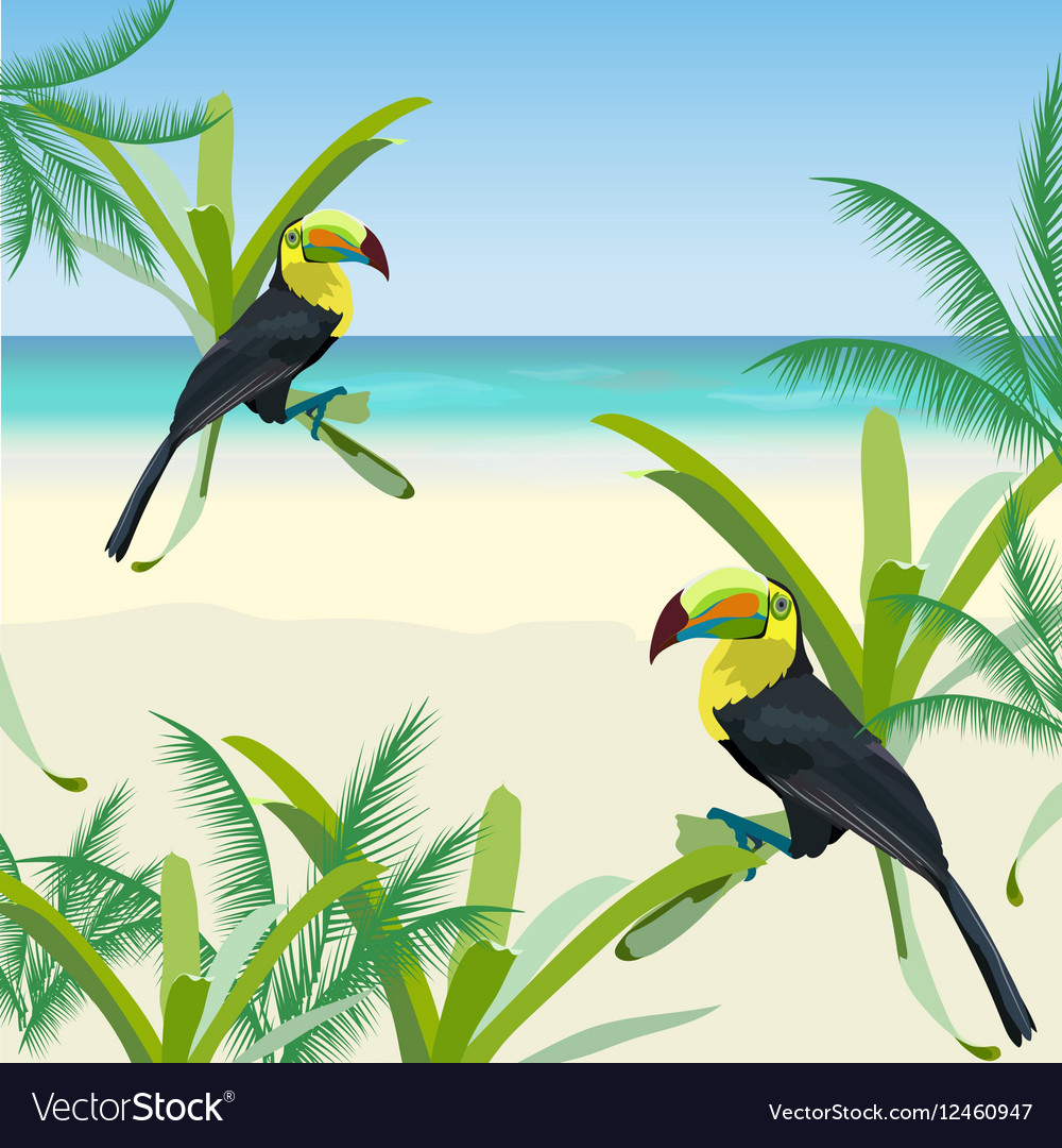 Exotic tropical card with toucan parrot birds vector image