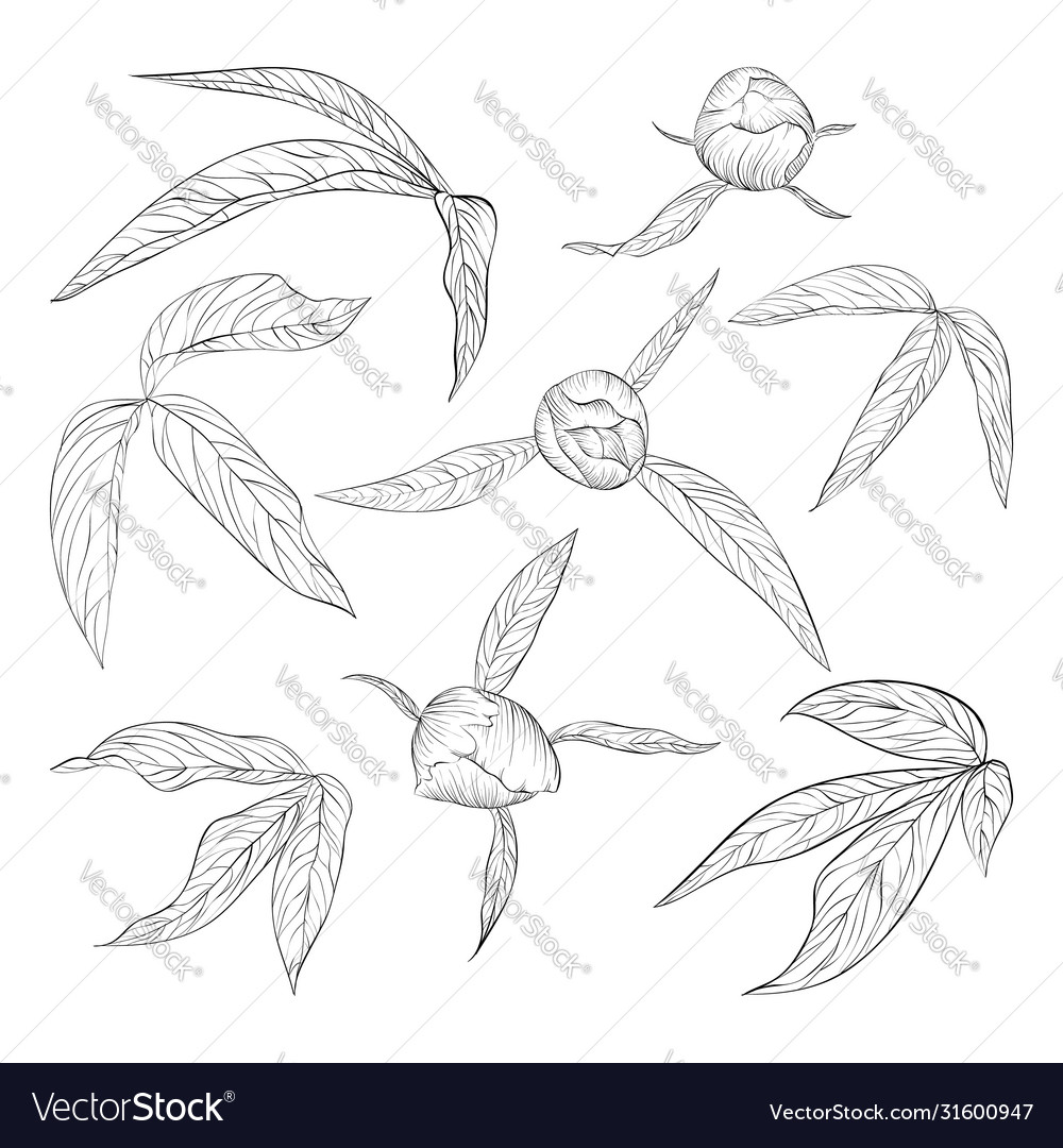 Set beautiful black and white peony leaves and
