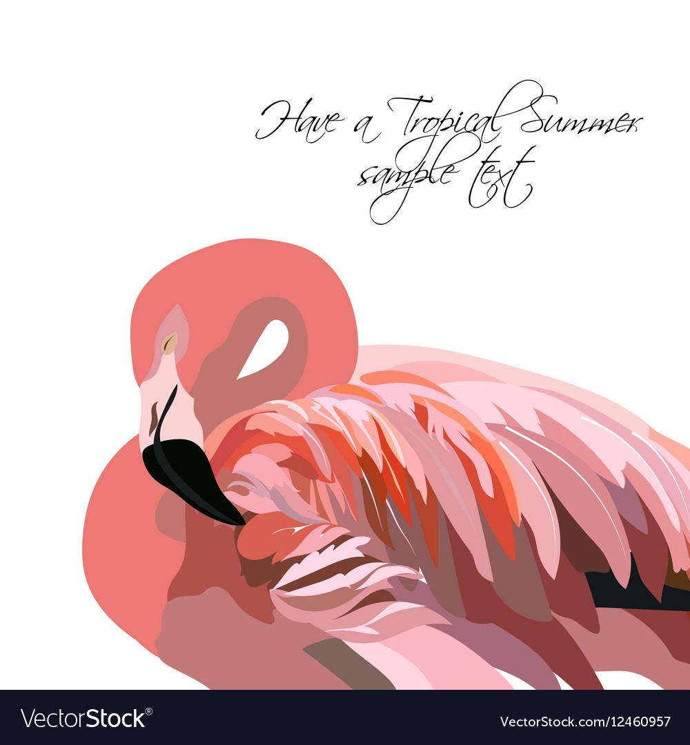 Flamingo bird isolated on white background