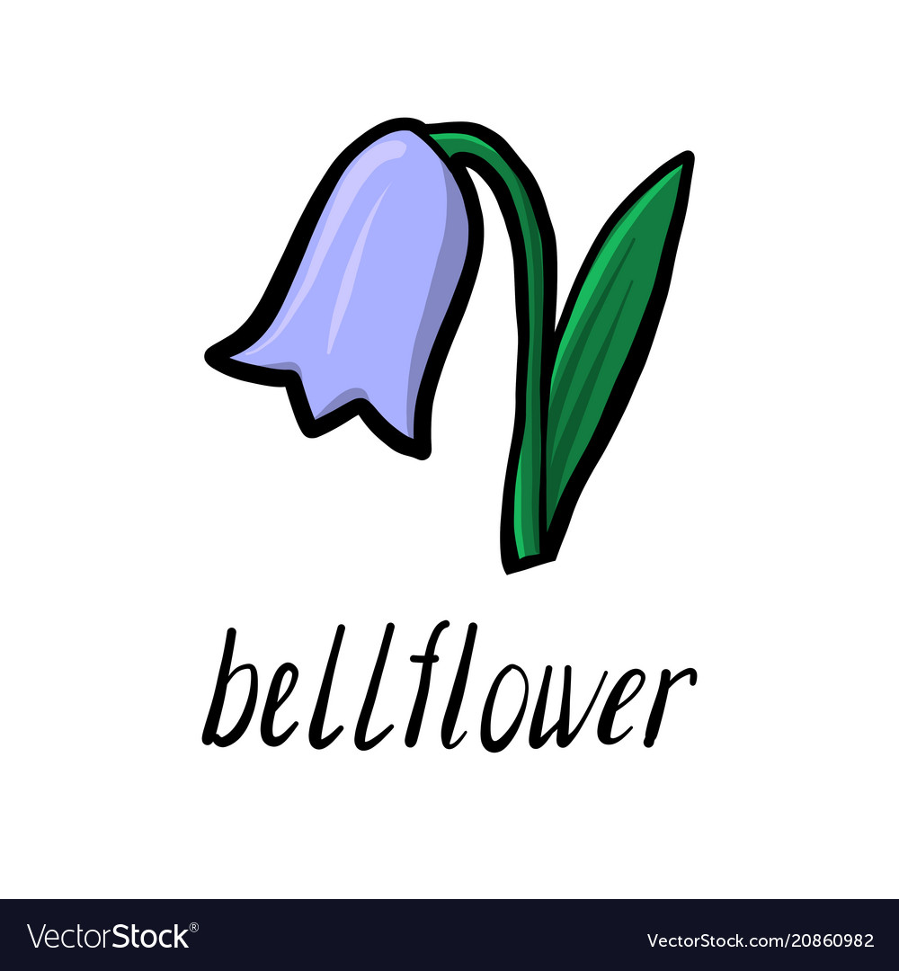 Flower of bell