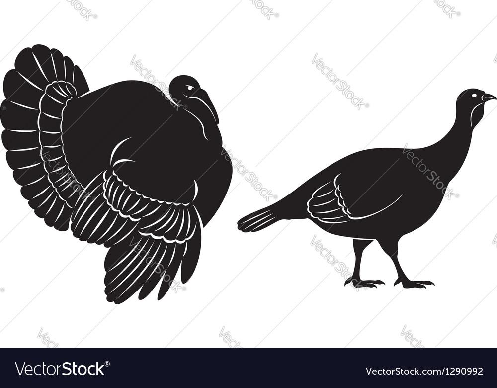 Bird turkey vector image