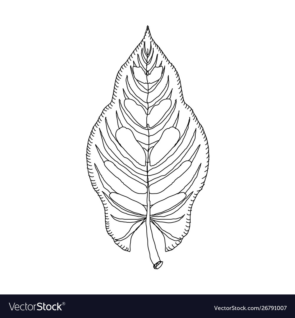Hand drawn leaf jungle tropical leave isolated