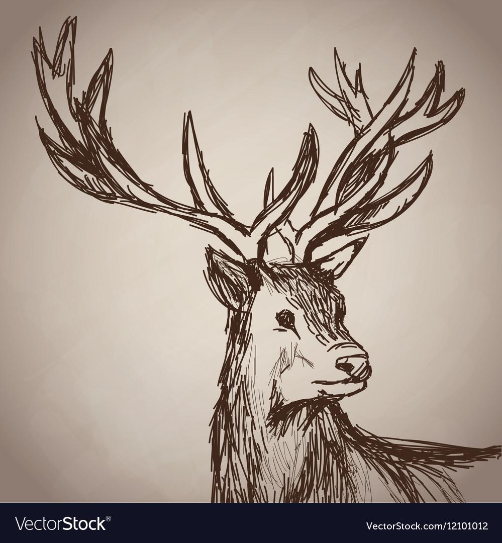 Deer portrait forest hand drawing vintage