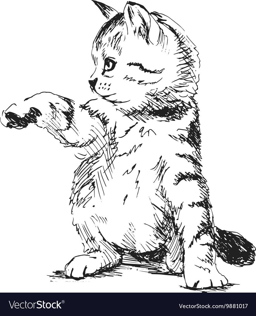 Hand sketch kitten vector image