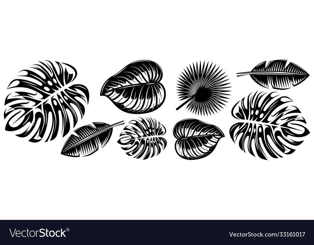 Set various tropical leaves design elements