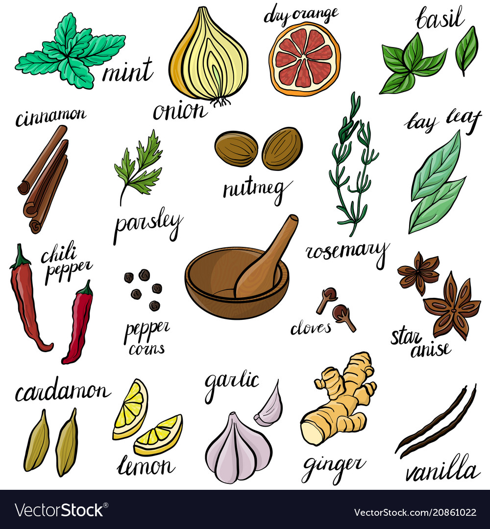 Spice set vector image