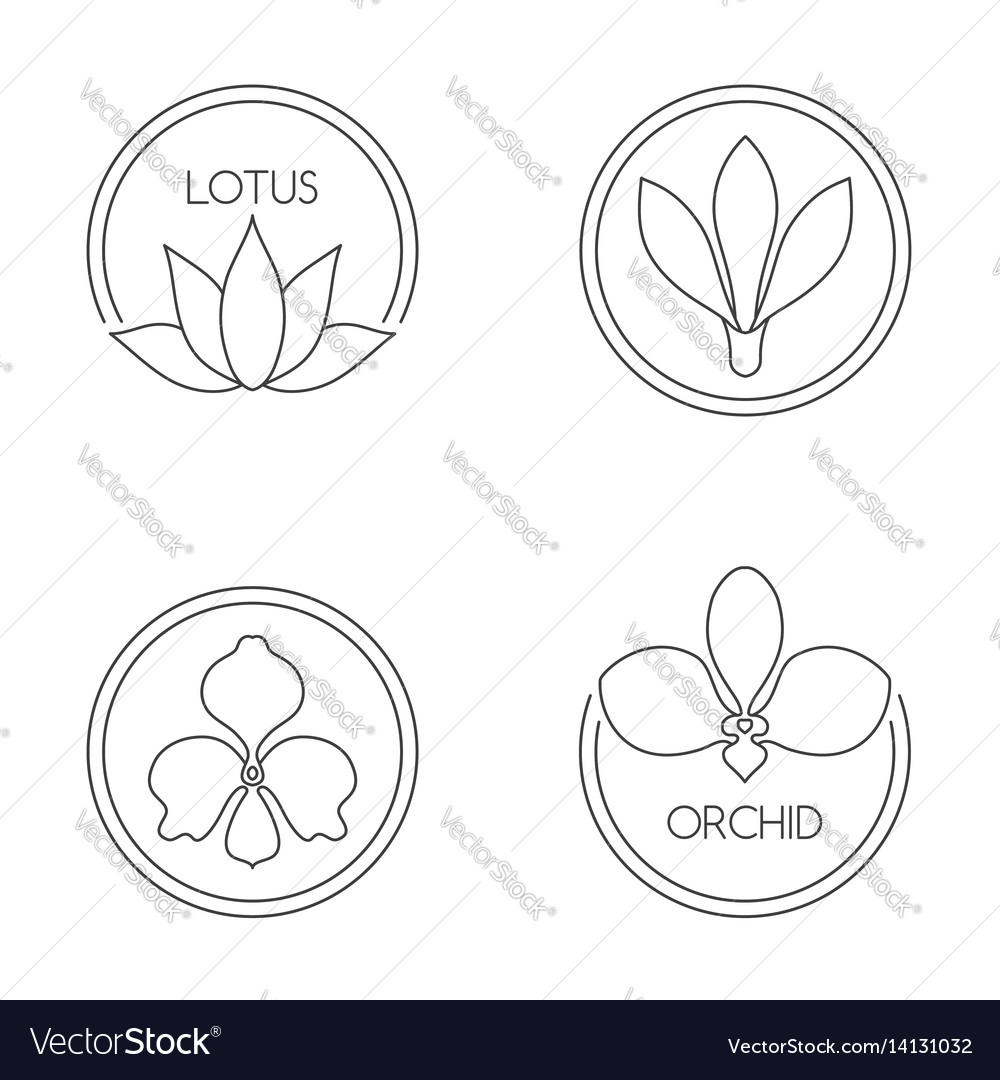 Set of flower logo on white background vector image