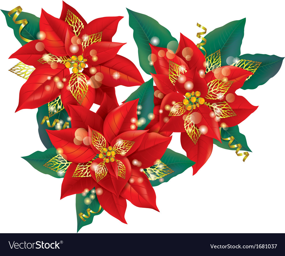 Christmas poinsettia with golden decorations Vector Image