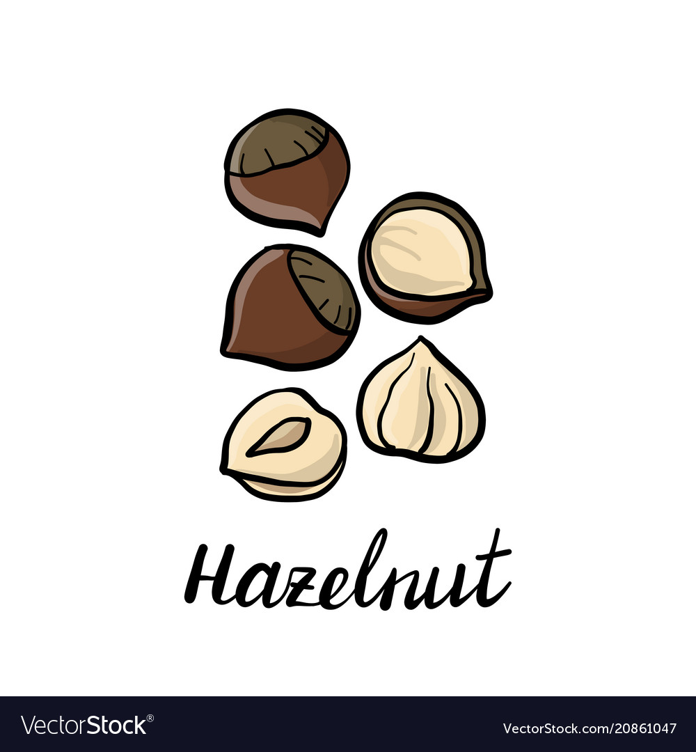 Drawing hazelnuts