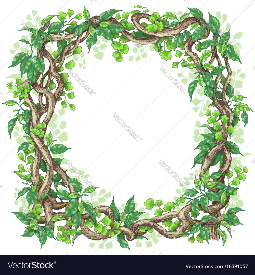 Green leaves and liana branches frame