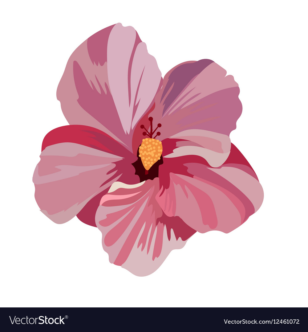 Tropical Pink Flower Isolated Royalty Free Vector Image