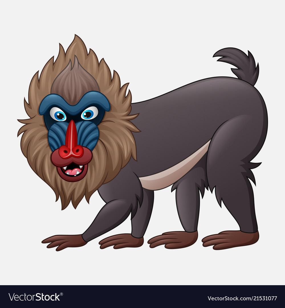 Cartoon mandrill baboon isolated on white