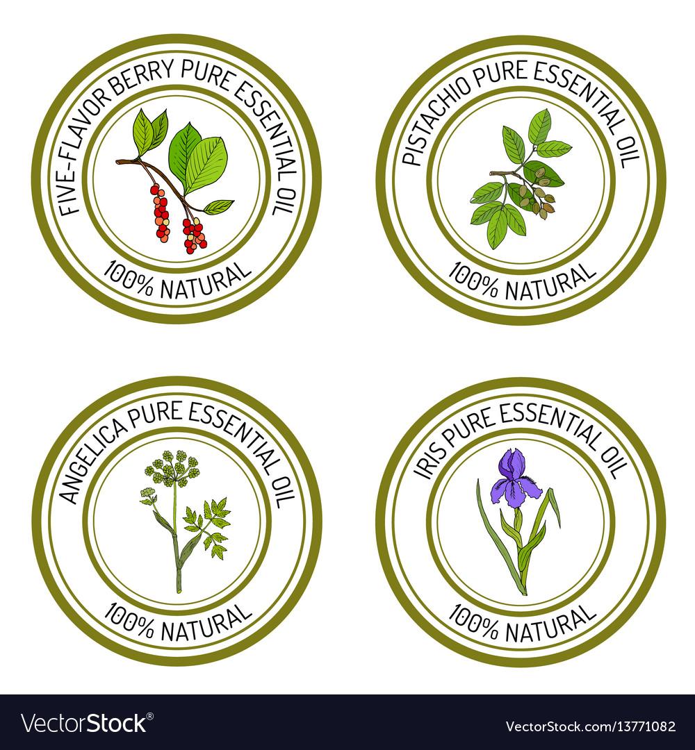 Set of essential oil labels angelica iris