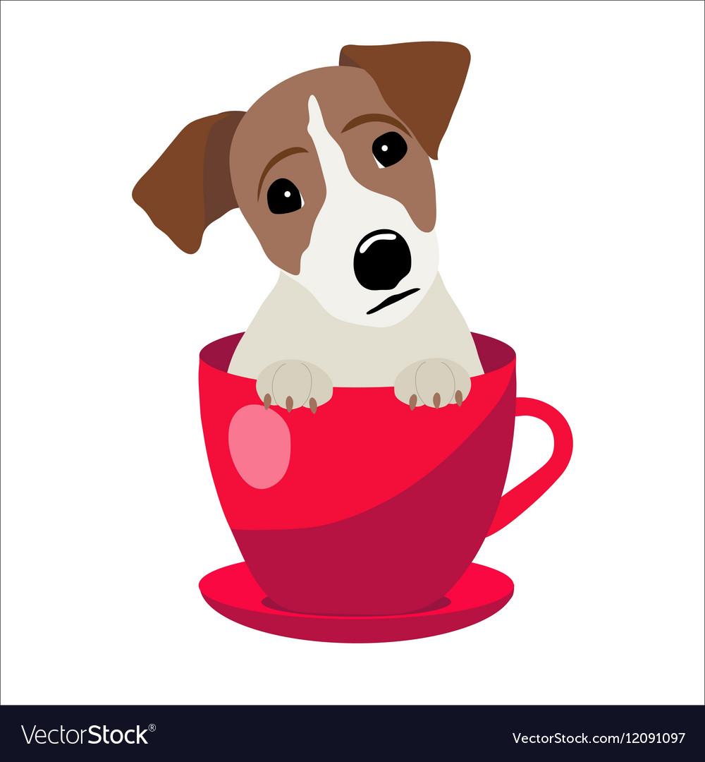 Jack Russell Terrier in red teacup