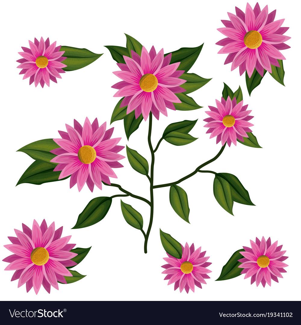Chrysanthemum flower plant in white background vector image izmirmasajfo