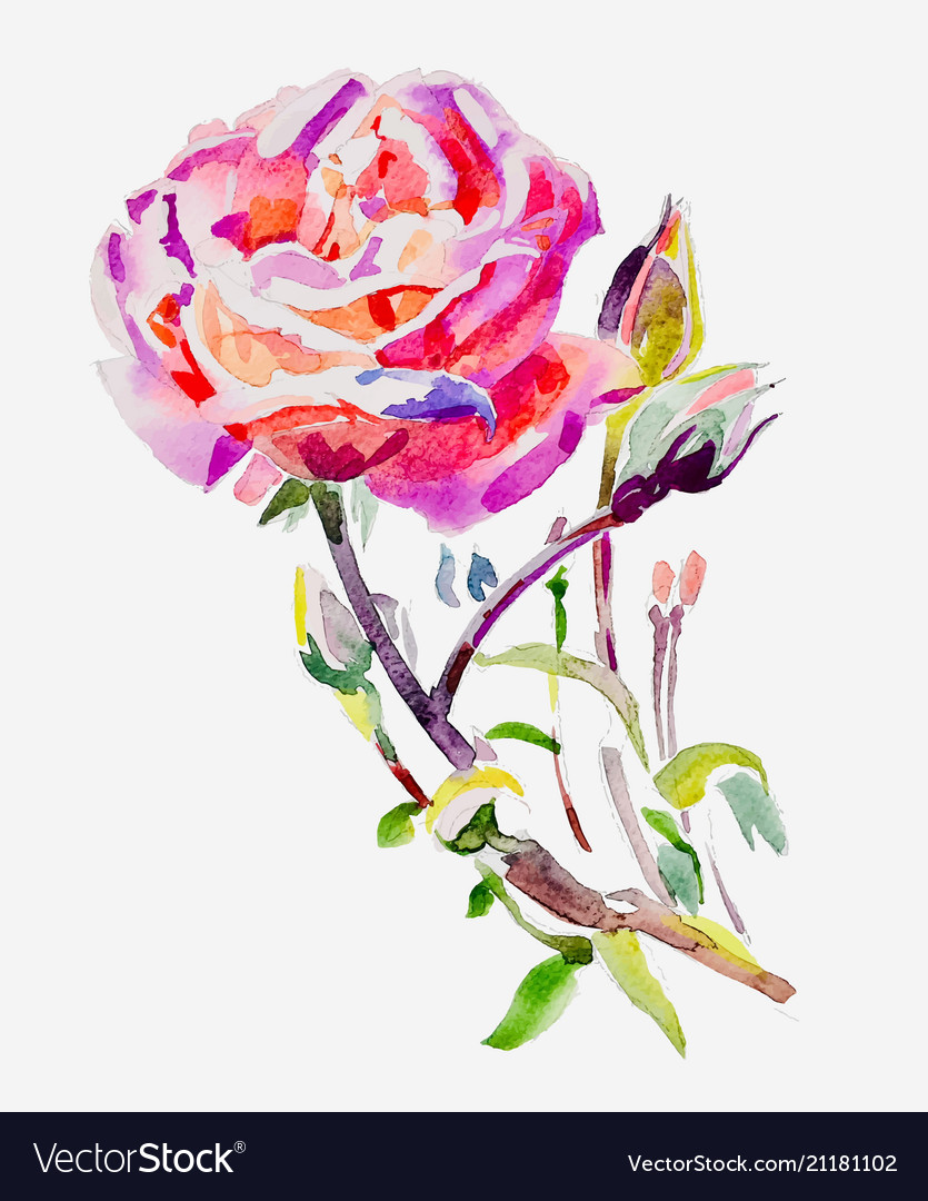 Original hand painting watercolor rose