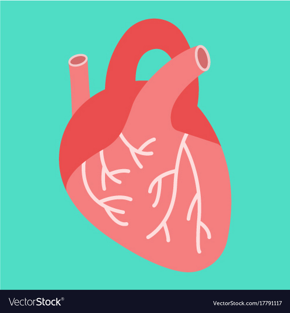 Human heart flat icon medicine and healthcare
