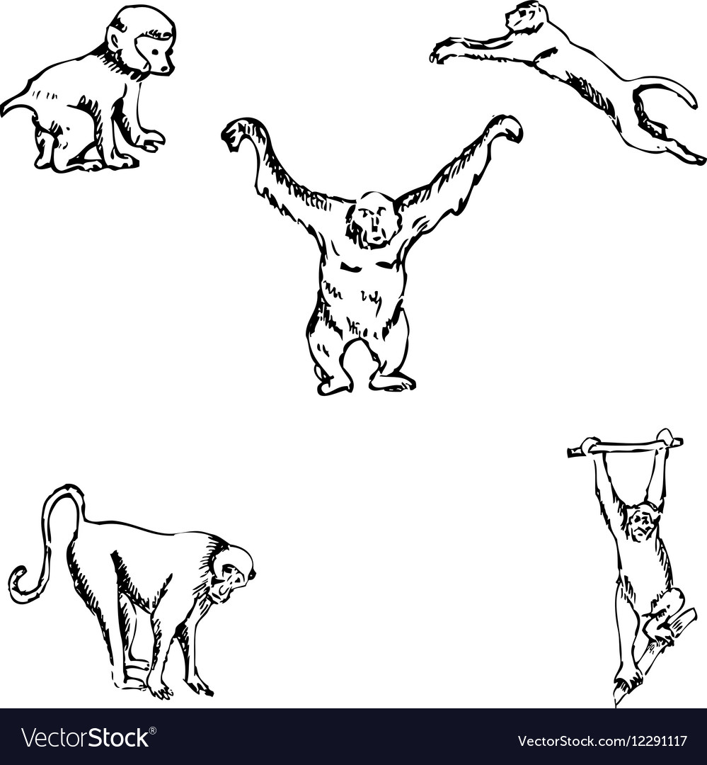 Monkey a sketch by hand pencil drawing vector image