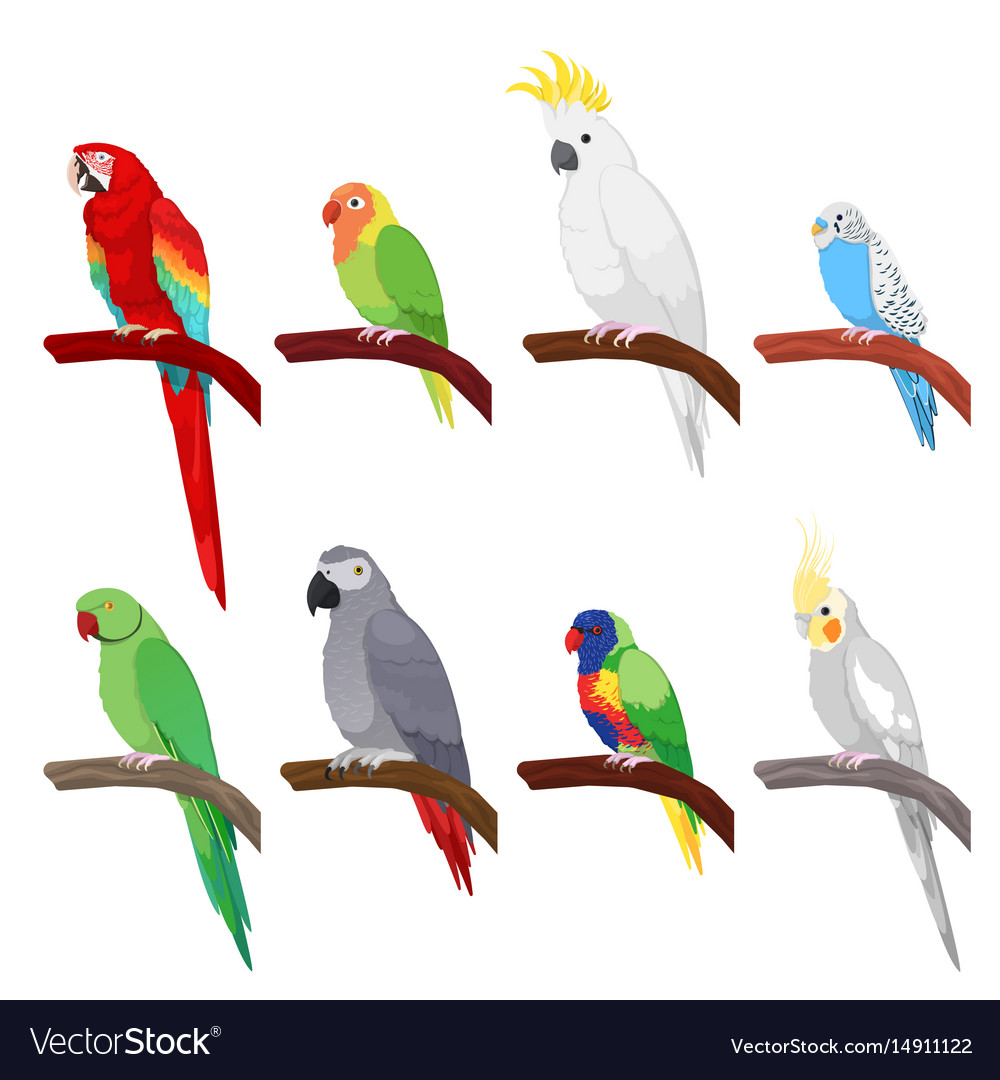 Tropical parrot set isolated on white background