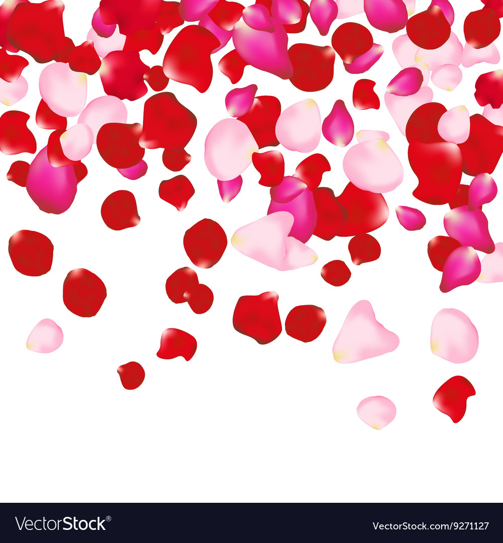 Red and pink rose petals isolated on white