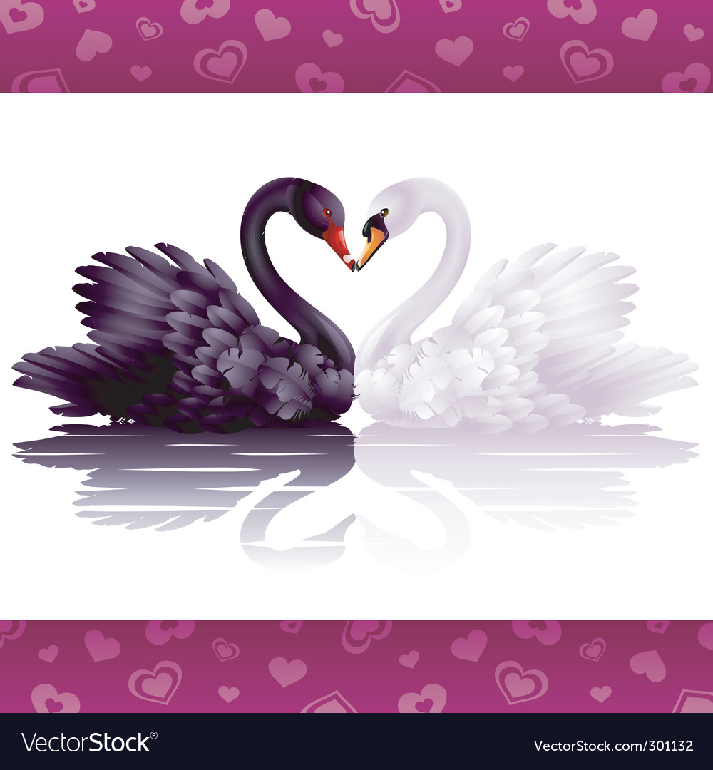 Two graceful swans in love vector