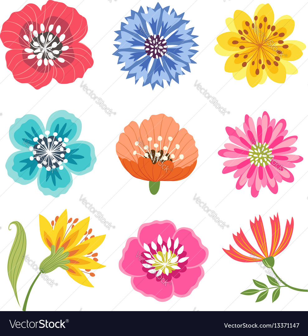 Set of colorful flowers vector image
